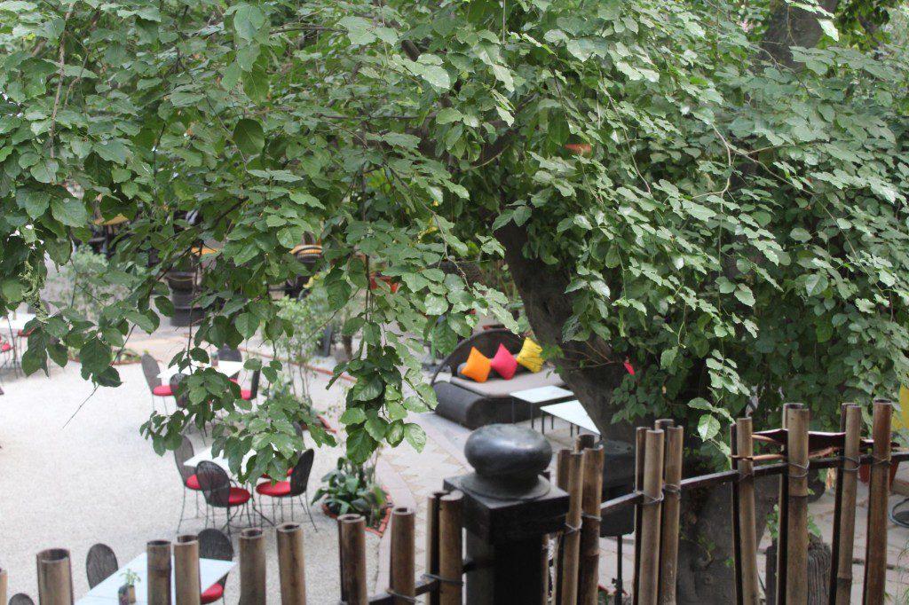 lodi-the-garden-restaurant (2)